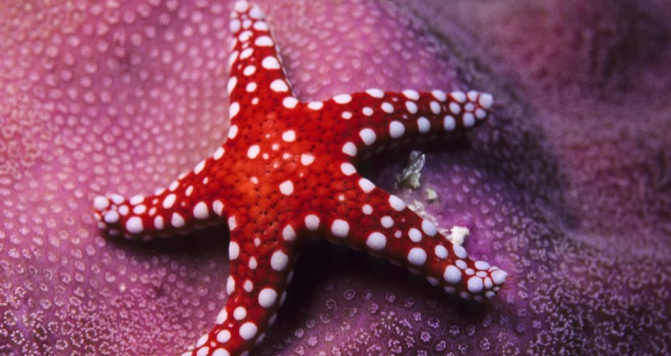 Sea Stars Make a Comeback After Mysterious 'Goo' Disease Killed Millions