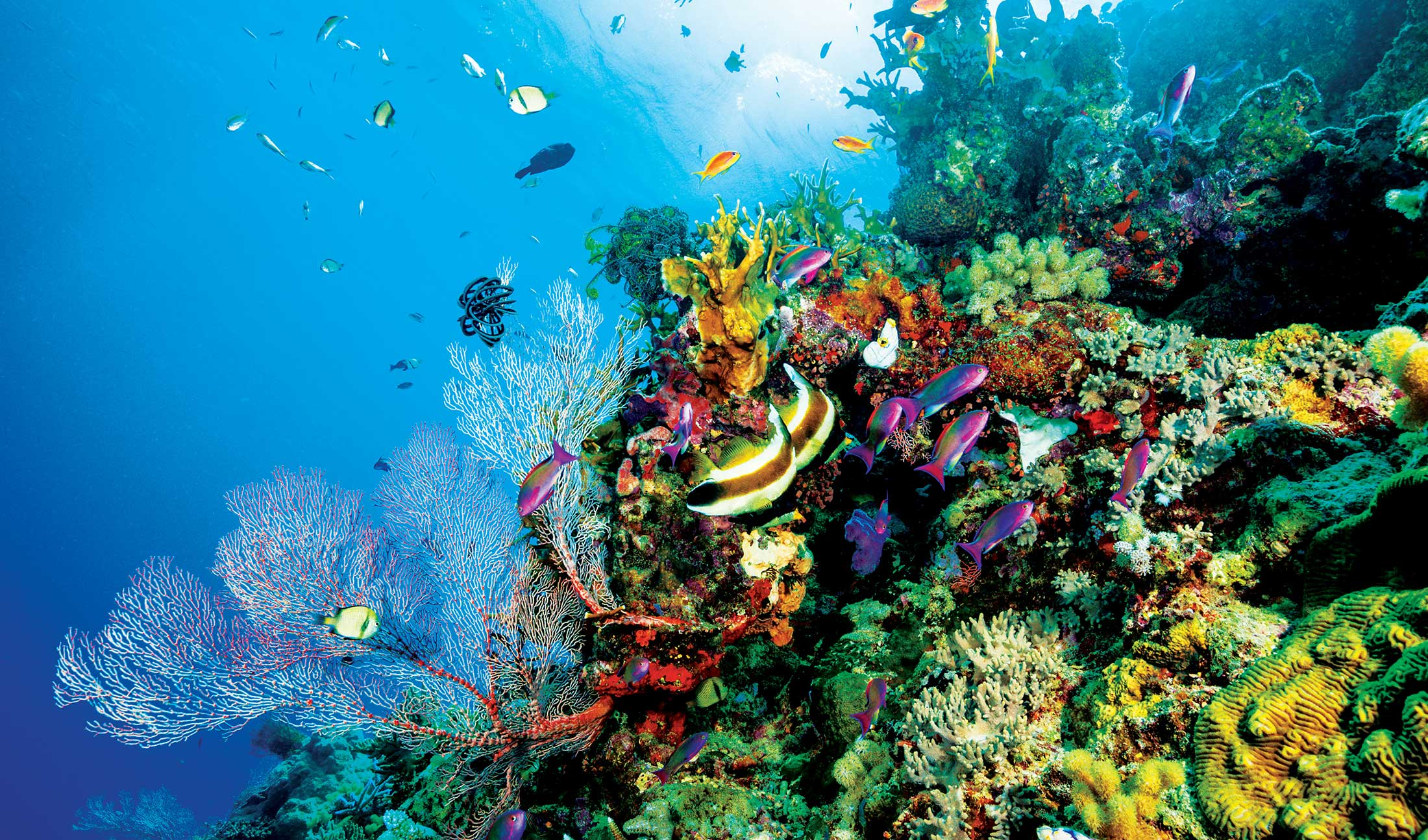 Scuba Diving Facts For Kids