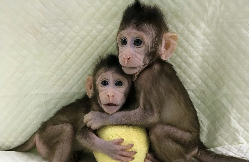 the morality of cloning and the health defects related to the clones Dolly, the world's first cloned mammal, has arthritis, one of her creators said today, heightening fears that cloning causes genetic defects that would make animal clones unsafe for use in human .