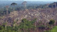 The Amazon Rainforest Is Heading Towards A Critical Point