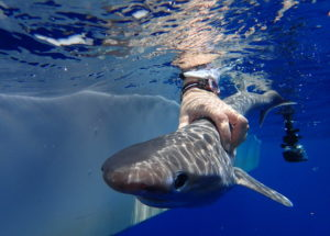 There's a New Shark Species in the Atlantic Ocean