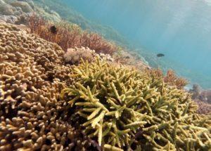 Coral Reefs May Die Due To Increasing Oceans' Acidity