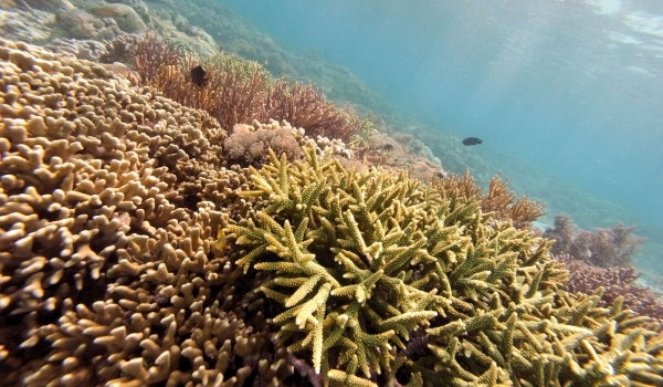 Coral Reefs at Risk of Dissolving