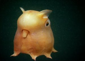 A Dumbo Octopus Newborn Was Caught On Video For The First Time Ever