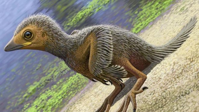 Bird Fossil Could Shed New Light on Dinosaur Era
