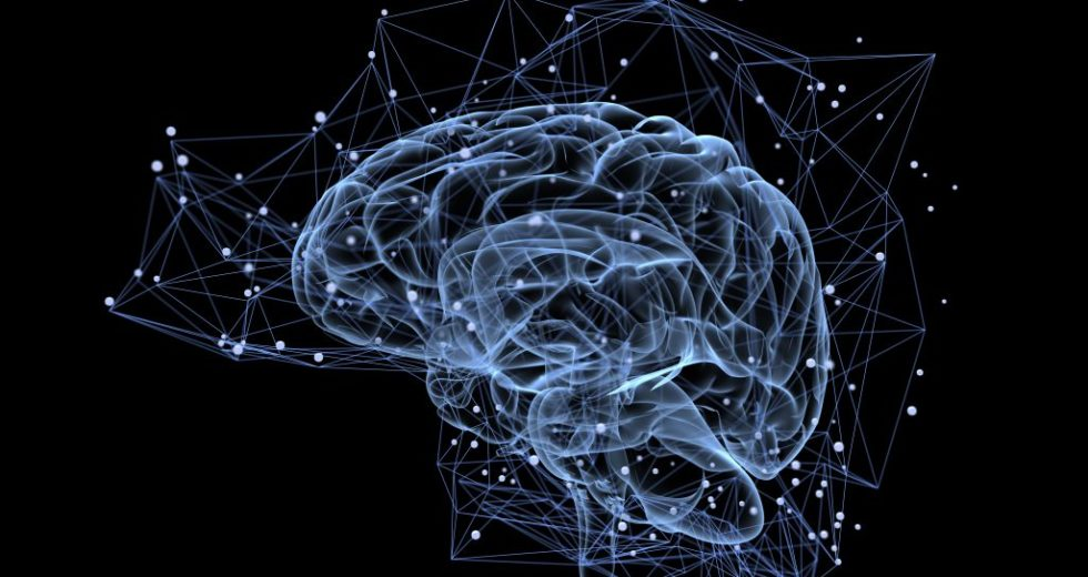 Neurogenesis diminishes after childhood, finds study