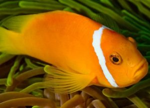 Sleeping with the Fish – A Real Concept