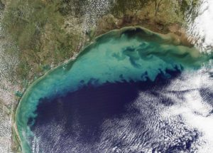 There is a New Dead Zone in the Gulf of Mexico