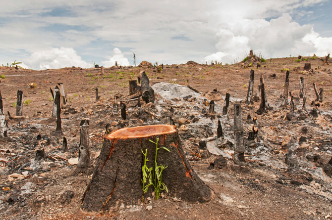 Deforestation Will Increase Global Warming More Than Expected, A New Study Reveals