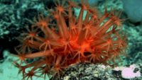Sessile Species That Live On The Deepest Seabeds Possess An Increased Longevity, A New Study Reveals
