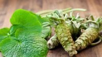 Wasabi – Here Is Why You Should Introduce Wasabi In Your Daily Diet