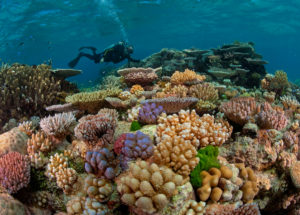 Using Sunscreen Also Damages Reef Corals – Here Are Some Alternatives
