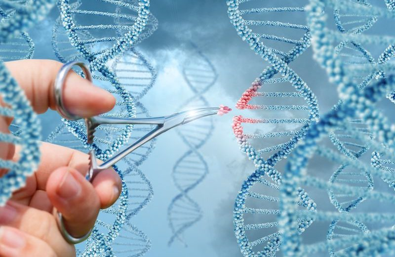 USA researchers identify, neutralise gene linked to Alzheimer's