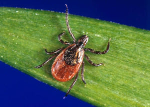 Bringing Back the Vaccine for Lyme Disease
