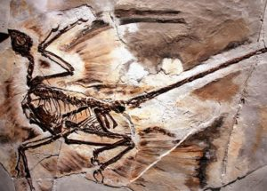 Fossilized Dandruff Has Been Found In Ancient Feathered Dinosaurs Remains