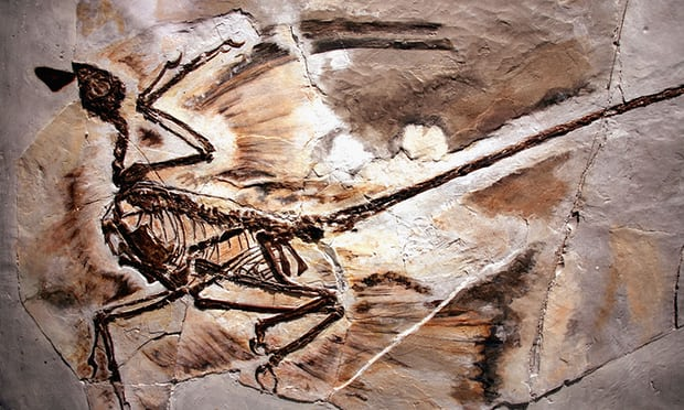 Dinosaur fossils show oldest case of dandruff