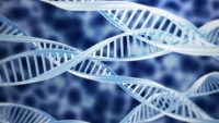 Recurrent Pregnancy Loss Is Linked To Genetic Abnormalities In 50% Of The Cases