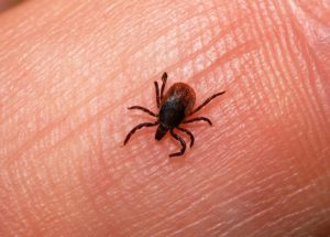 Eastern Canada Is More Vulnerable To Lyme Disease In The Last Years, Statistics Show