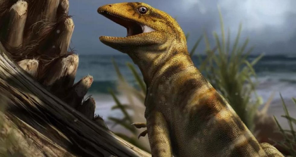 Scientists finally find the 240-million-year-old 'mother of all lizards'