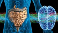 "The ""Second Brain"" – The Gut-Brain Link Influences Memory And Learning"