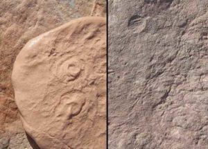 Ancient Sea Creature Discovered By Scientists, Named After President Barack Obama