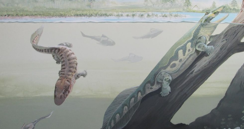 Tetrapod fossil discovery in S. Africa dispels tropical myth