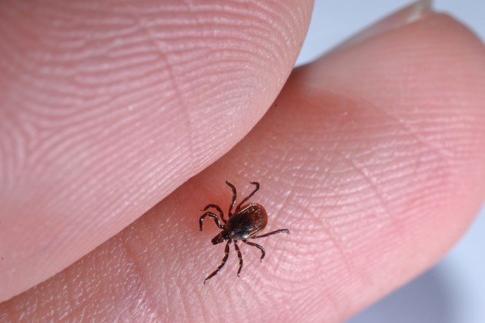 I Found a Tick! Now What?