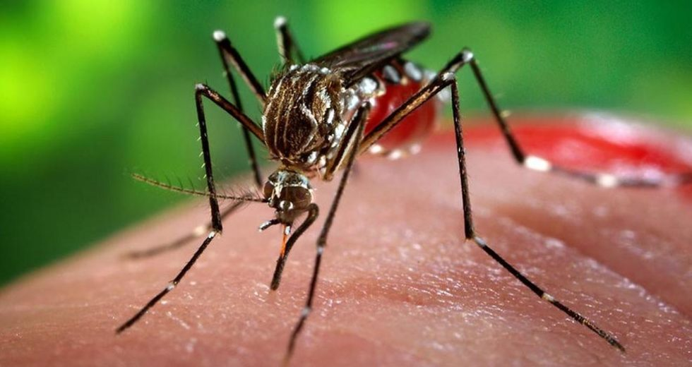 China is Officially Malaria-Free