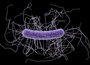 New 'Smart' Antibiotic Could Tackle The Most Common Bacterial Infection Affecting The US Hospitals
