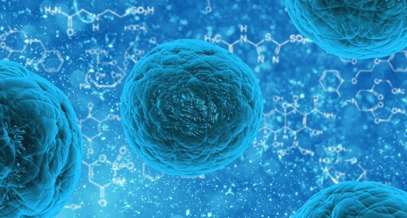 Scientists Analyzed Cells Variability Factors That Influence The Production of Proteins