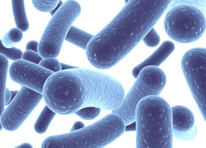 Probiotics Might Not Be As Beneficial As Initially Thought