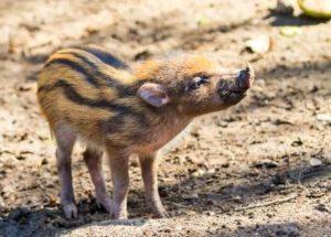 Genome Analysis May Save Endangered Species