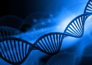 Part Human and Part Monkey Embryos Become Reality