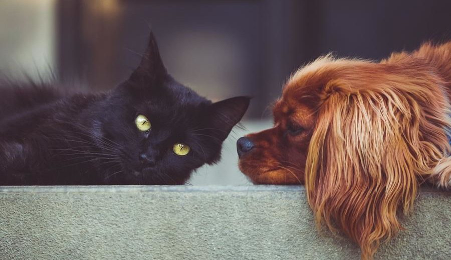 A Country Begins Developing COVID-19 Vaccine for Dogs and Cats