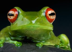 Bacteria From Frog Skin Might Help Humans Fight Fungal Infections