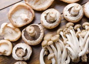 Mushrooms Can Reduce Brain Degeneration