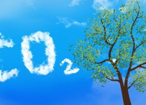 Microbes Store Millions of Tons of Carbon Dioxide