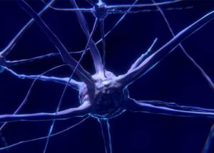 The Brain Produces New Neural Cells Throughout The Whole Life, According To New Research