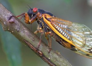 "Deadly Fungus Turns Insects Into ""Zombies,"" Causing Their Extremities And Genitals To Fall Off"