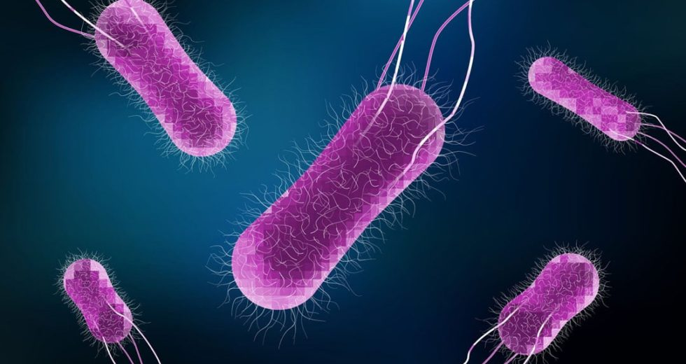 Salmonella Alert Across The US – Beef And Cheese Products Are Infested