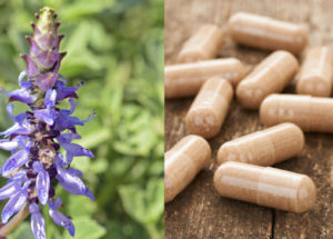 Best Forskolin Supplements from 2019's Market – Reviews and Recommendation