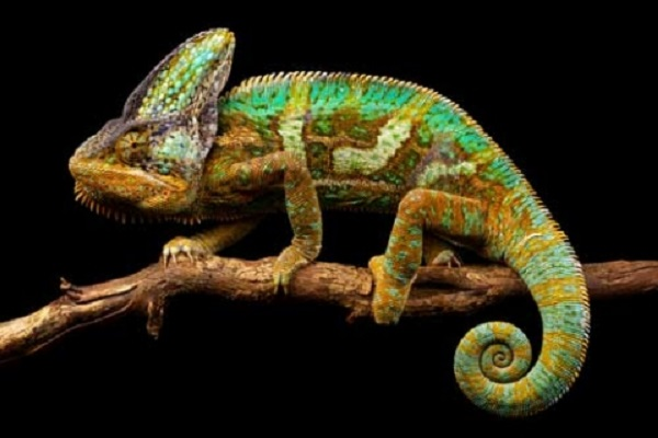 """""""Chameleon"""" Smart Skin Invented By Scientists Switches Colors When Exposed To The Sun"""