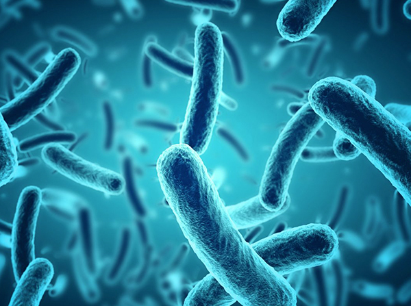 Bacteria use an Interesting Mechanism to Survive in the Human gut