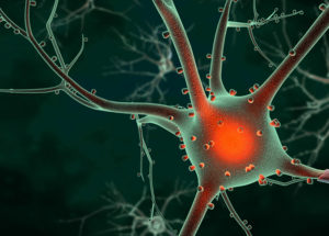Mind-Blowing Discovery in Neuroscience: Information From Neurons Can Take Unexpected Turns