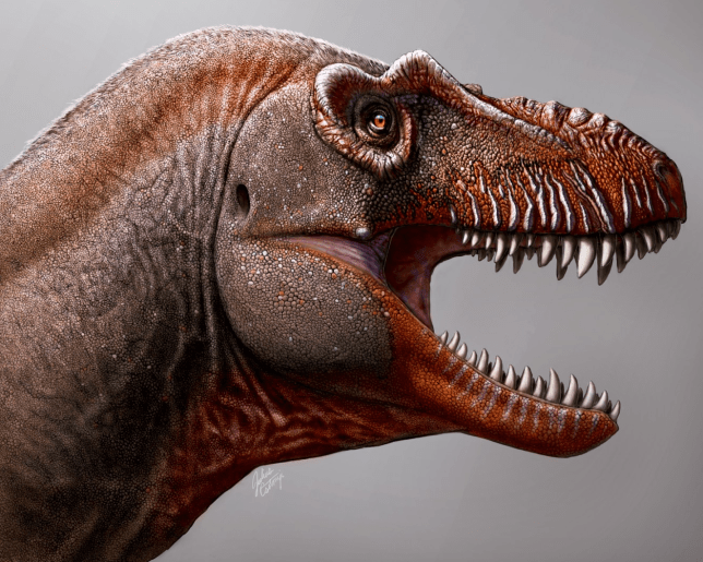 Researchers Learn More About a Fascinating Dinosaur Species