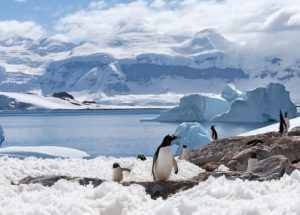Surprise from Antarctica: Camera attached to Seal Exposes Something Peculiar