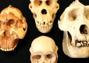 How Intelligent Were Neanderthals? A String Can Show Us