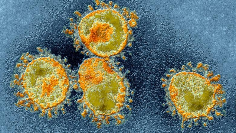 "Coronavirus Immunity — New Study Explains The COVID-19 ""Achille's Heel"""