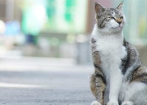 Coronavirus Affects Pet Cats – Two Cases Registered In New York