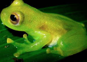 Cold-Blooded Frog Lived In Warm Antarctica, Fossil Records Show